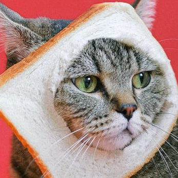 brown tabby cat with slice of loaf bread on head